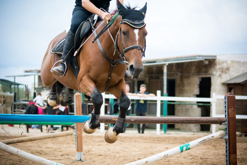 Horse jumping obstacles during equestrian school training on blur background