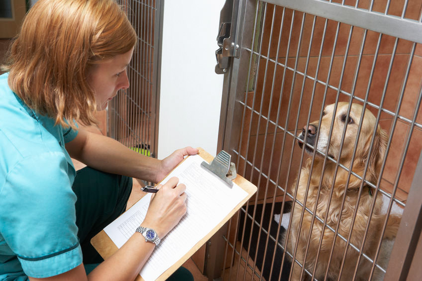 Vet clinical audit