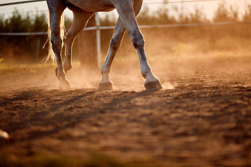 Horse foot hoof run outdoor stables