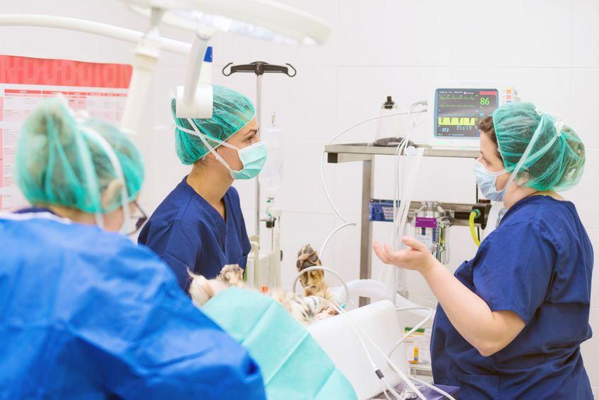 Group of veterinarian surgeons at work