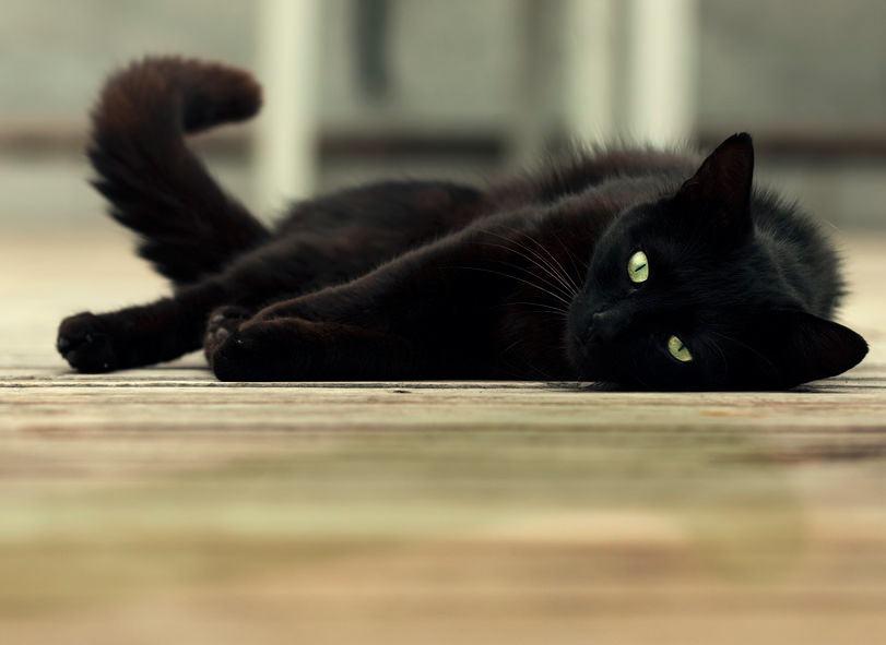 black cat lying on wooden floor