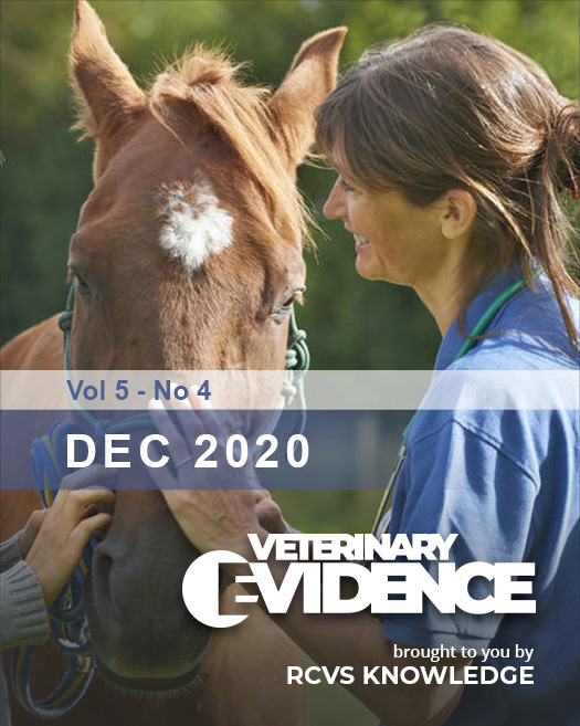 Equine vet examining a horse