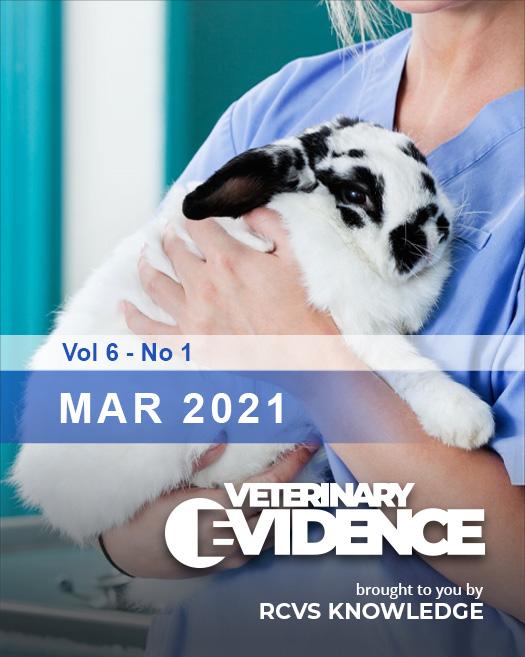 Vet holding a rabbit